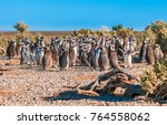 magellanic penguins in... | Shutterstock . vector #764558062