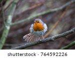 a european robin  erithacus... | Shutterstock . vector #764592226