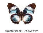 Stock photo brown and blue butterfly hypolimnas monteironis isolated on white background 76469599