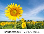 Sunflower With A Sky Backgroun...