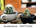 Small photo of Cacti in cups