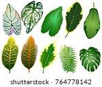 summer  spring leaves set.... | Shutterstock .eps vector #764778142