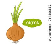 vector illustration of an onion.... | Shutterstock .eps vector #764866852