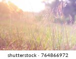 grass at sunrise | Shutterstock . vector #764866972