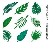 green tropical leaf set  palm... | Shutterstock .eps vector #764976682