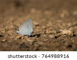 Grey Butterfly On Ground