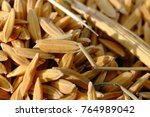 close up paddy rice  | Shutterstock . vector #764989042