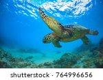 sea turtle underwater against... | Shutterstock . vector #764996656