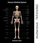 3d illustration of human... | Shutterstock . vector #765101062