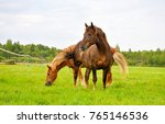 Stock photo two horses on pasture 765146536