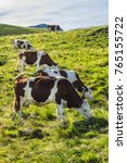 Small photo of A cow is pasturing on green lush meadow in Alps Mountains. Auvergne-Rhone-Alpes. France.