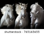 Stock photo three white horse with long mane run free on black background 765165655