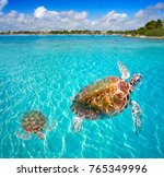 akumal beach turtles photomount ... | Shutterstock . vector #765349996