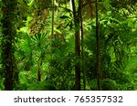 tropical rainforest  queensland ... | Shutterstock . vector #765357532