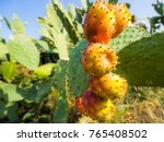 close up of barbary figs on... | Shutterstock . vector #765408502