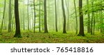 foggy natural forest of oak and ... | Shutterstock . vector #765418816