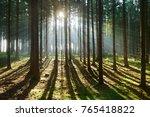 spruce tree forest  sunbeams...   Shutterstock . vector #765418822