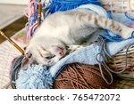 bengal kitten cat   Shutterstock . vector #765472072