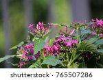 pink purple pentas and lantana