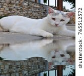 Small photo of White cat mirroring in puddle water reflection reflect image