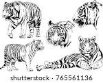 vector drawings sketches... | Shutterstock .eps vector #765561136