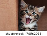 Stock photo tabby kitten smiling 76562038