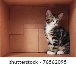 Tabby Kitten In A Cardboard Box