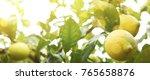 summer blurred background.... | Shutterstock . vector #765658876