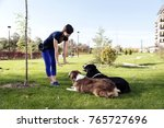 two dogs laying obey training... | Shutterstock . vector #765727696