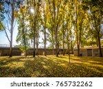 sunlight in the autumn forest.... | Shutterstock . vector #765732262