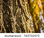 close up of a log in the forest ... | Shutterstock . vector #765732472