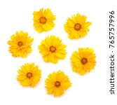 Yellow Daisies Isolated On A...