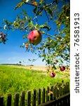 Tree Disease  Wormy Apple