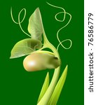 bean sprout on a green... | Shutterstock .eps vector #76586779