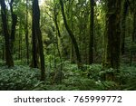 mountain forest in south east... | Shutterstock . vector #765999772