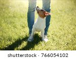 Small photo of girl to train a small dog. People with a pet together. Funny and clever Jack Russell Terrier