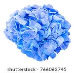 mop head hydrangea flower... | Shutterstock . vector #766062745