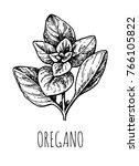 oregano ink sketch. isolated on ... | Shutterstock .eps vector #766105822