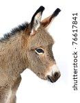 Baby Donkey  5 Days Old  In...
