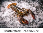 Raw Lobster On Ice On A Black...