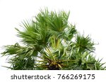 palm tree leaf | Shutterstock . vector #766269175