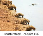 troop of baboons with heads... | Shutterstock . vector #766325116