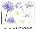 blue purple agapanthus outline  ... | Shutterstock .eps vector #766382608