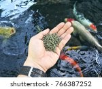 fish food prepare to feed the... | Shutterstock . vector #766387252
