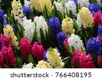 red  yellow  white  purple...   Shutterstock . vector #766408195