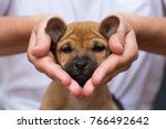 girl holding puppy in her hands.... | Shutterstock . vector #766492642