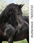 Nice Black Horse Looking In...