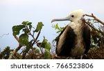 birds in isla de la plata ... | Shutterstock . vector #766523806