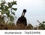birds in isla de la plata ... | Shutterstock . vector #766524496