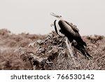 birds in isla de la plata ... | Shutterstock . vector #766530142